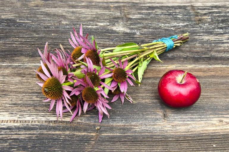 plantes-immunité-défenses
