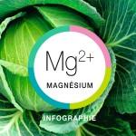 Du magnésium, pour quoi faire?