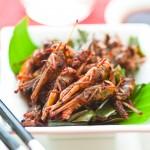 Consommation d'insectes: nouvelles règles en vue