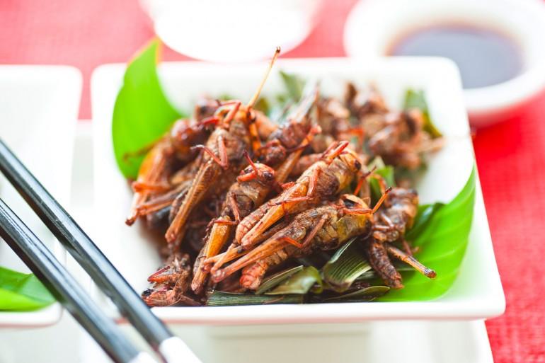 insecte-alimentation-protéine-Novel Foods
