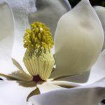 Nouveau : l'Huile Prodigieuse® Florale