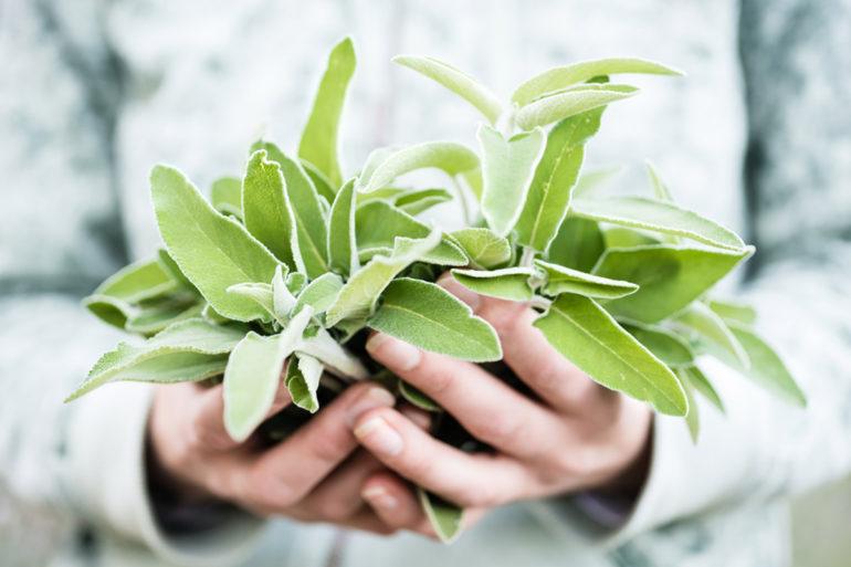 detox-plantes-digestion-fetes-estomac